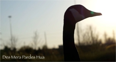 Des Mera Pardes - Cover Shot 2 (FILMI)